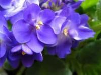 Նվիրեք մեզ ներողություններ ծաղիկների փոխարեն