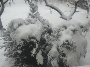 Հանրապետության ողջ տարածքում  սպասվում է առատ  ձյուն