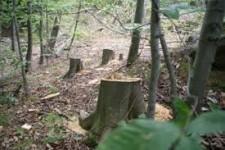2011 թվականին ապօրինի հատված ծառերի թիվը հասնում է 1690-ի