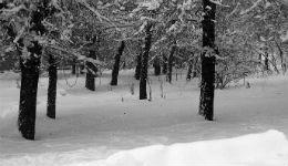 Կանխատեսվում է, որ Երևանի բարձրադիր գոտում առաջիկա գիշերը կձևավորվի 5-10 սմ ձնածածկույթ