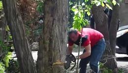 Երեւանի կենտրոնում տարածք է վաճառվել ԻԻՀ քաղաքացի հանդիսացող ադրբեջանցու, որը հատել է ծառերը